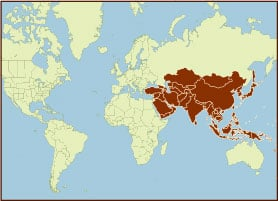 Spice Map - Asia